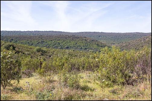 [Espagne] Parc national de Montfragüe Img_4019