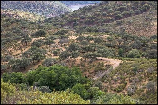 [Espagne] Parc national de Montfragüe Img_4219