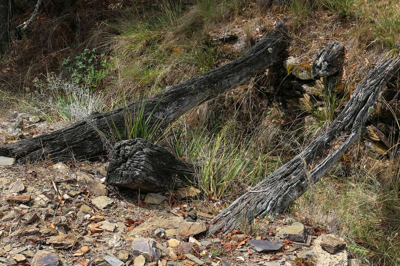 Ophir Goldfield Reserve trip - 2017 - in pictures. Img_9910