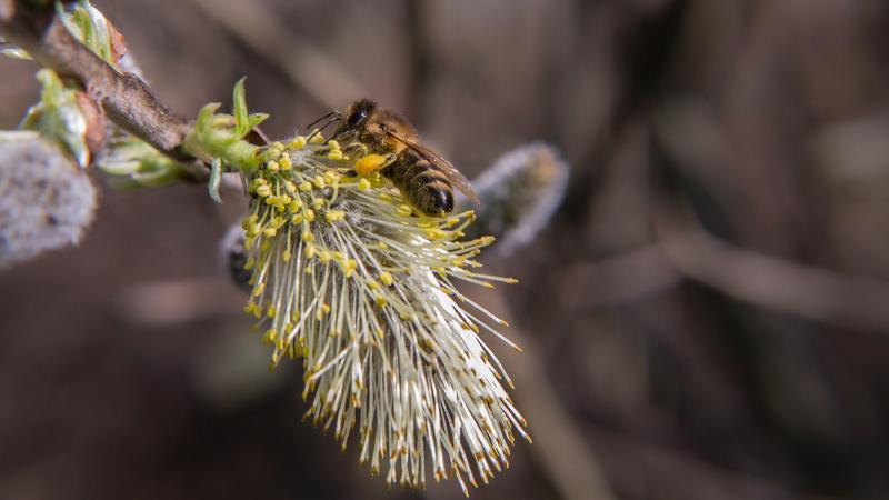 Erste Frühlingsboten im Garten und in Wald und Flur - Seite 49 P1590510