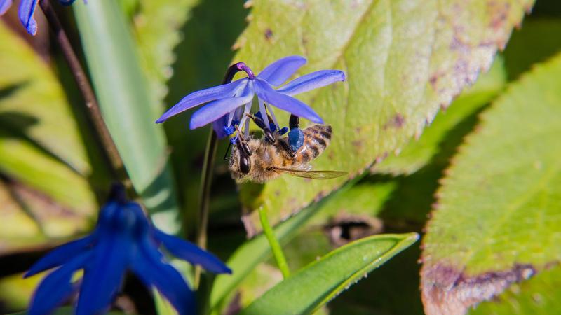 Erste Frühlingsboten im Garten und in Wald und Flur - Seite 49 P1590610
