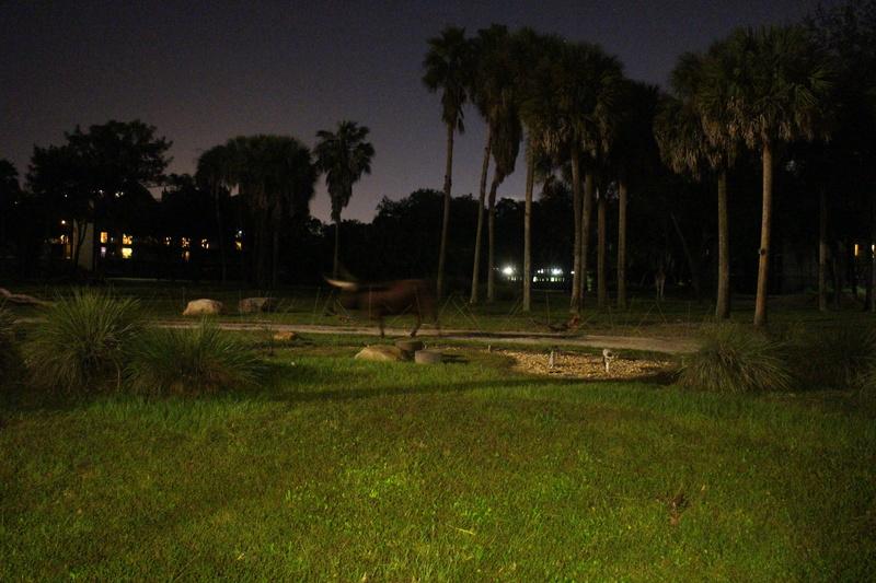 Road Trip Floridien : Le rêve de 2 soeurs - Du 4 au 21 Octobre 2015 (MAJ : 21/05/2017) - TR Terminé - Page 29 Img_5120
