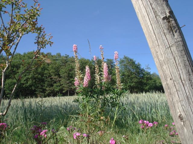 Fleurs de saison - Page 2 Dsc03234