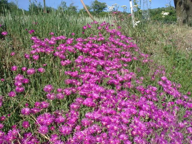 Fleurs de saison - Page 2 Dsc03235