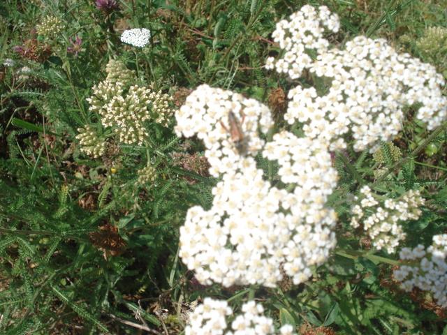 Fleurs de saison - Page 2 Dsc03415