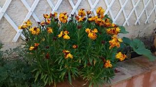 Fleurs de saison Img_2034