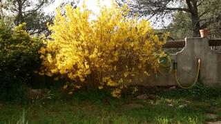 Fleurs de saison Img_2036