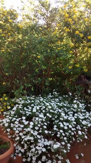 Fleurs de saison Img_2037