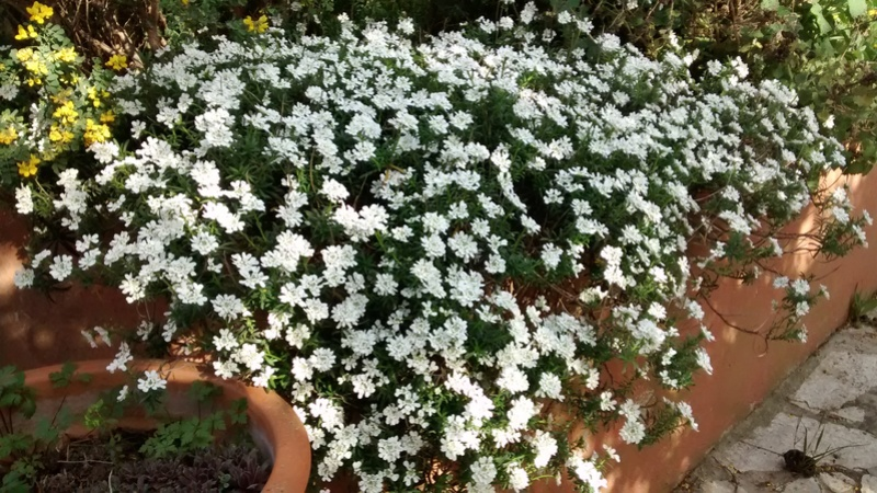 Fleurs de saison Img_2044