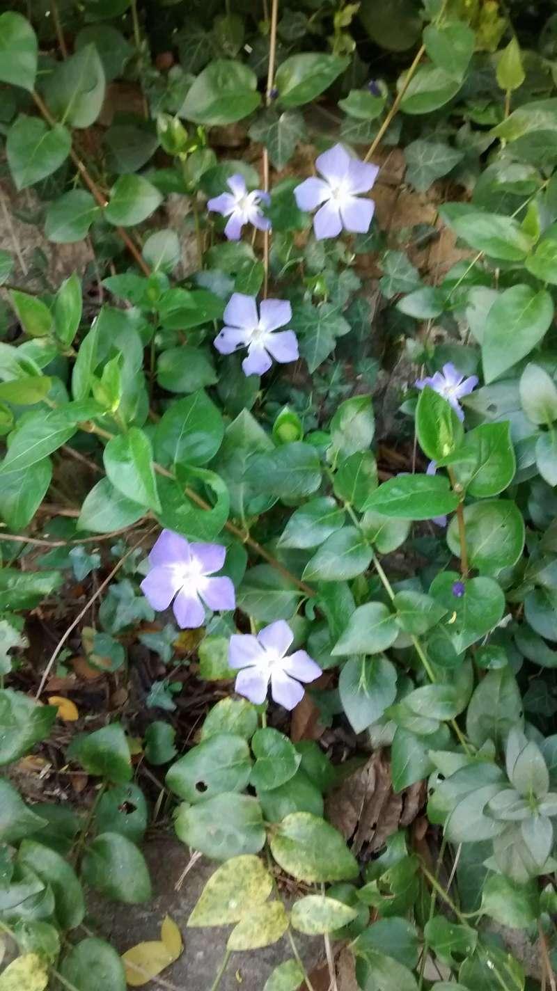Fleurs de saison Img_2045