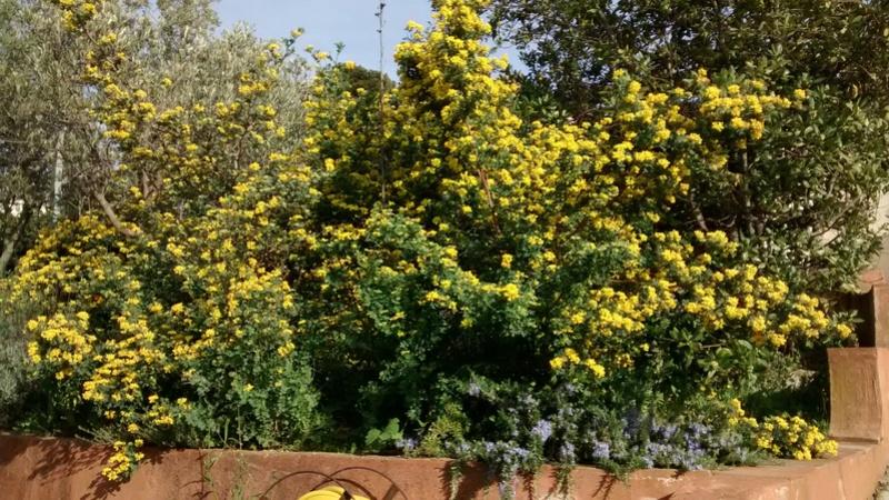 Fleurs de saison Img_2048
