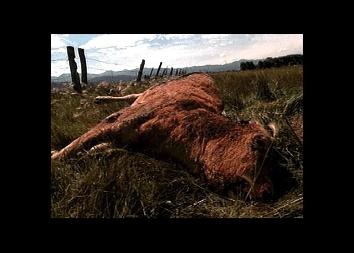 Mutilations animales 12330