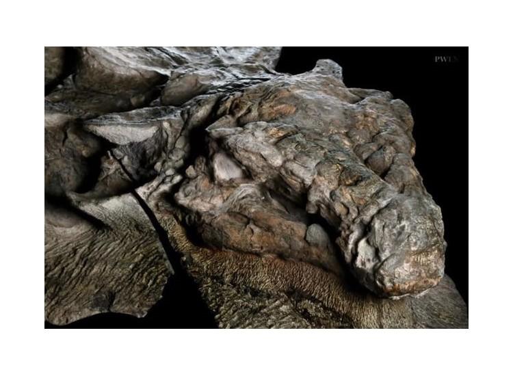 Les scientifiques sidérés par un dinosaure exceptionnellement bien conservé  96009812