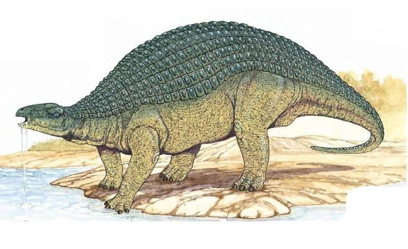 Les scientifiques sidérés par un dinosaure exceptionnellement bien conservé  96009813