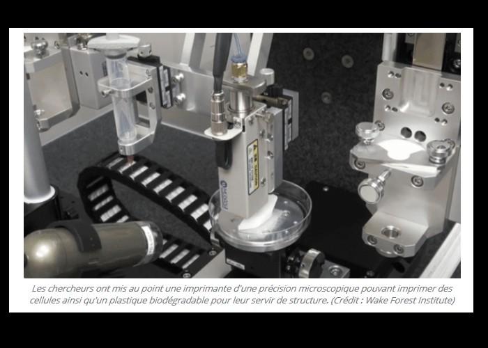 Imprimé en 3D, cet os synthétique permettra bientôt de réparer les fractures à moindre coût Bn26