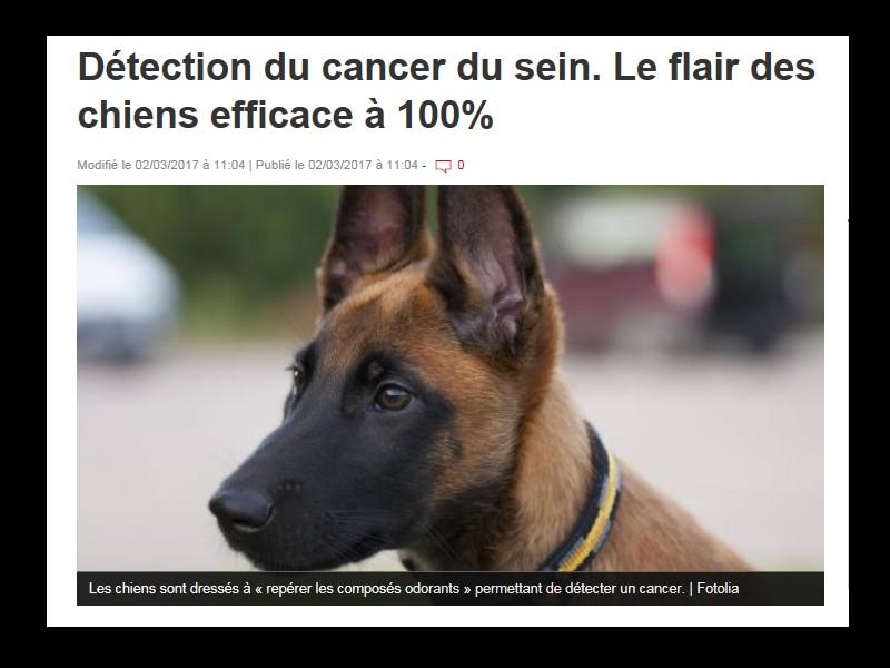 Détection du cancer du sein. Le flair des chiens efficace à 100%  Sans_105