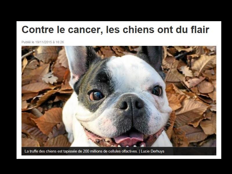 Détection du cancer du sein. Le flair des chiens efficace à 100%  Sans_106