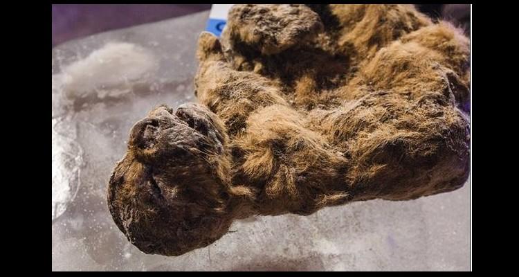 Extinctions massives il y a 12 000 ans  W23