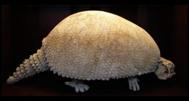 Extinctions massives il y a 12 000 ans  W25