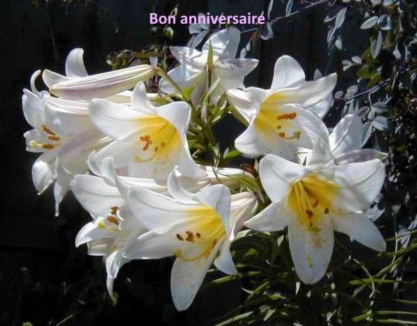 Joyeux anniversaire Lys !  Fleur-10