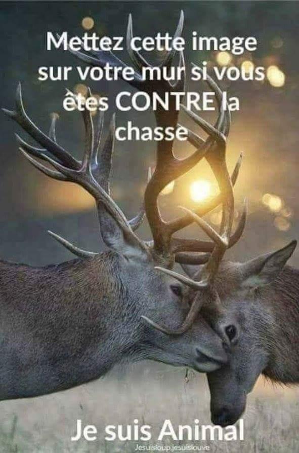 Permis de chasse accordé par Macron 220b5f10