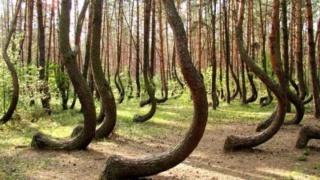 Etreindre des arbres est bon pour la santé 538aac10