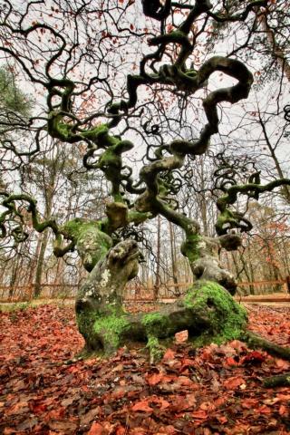 Etreindre des arbres est bon pour la santé 59947610