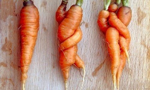 La dictature du paraitre chez les fruits et légumes Img_0225