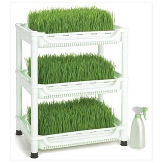 Herbe pour jus Img_0617
