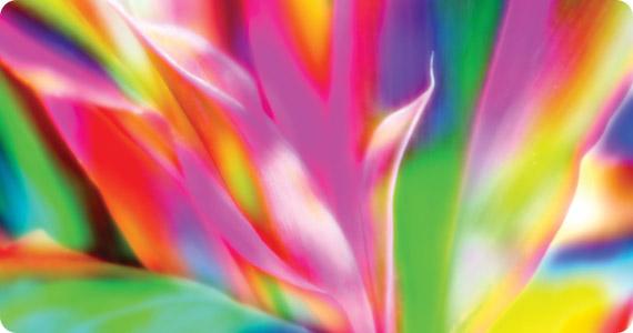 L'impact des couleurs sur les plantes Img_1410