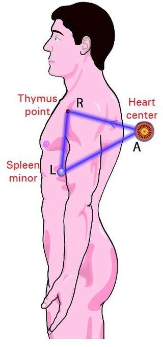 Le Thymus, point du bonheur Img_1714