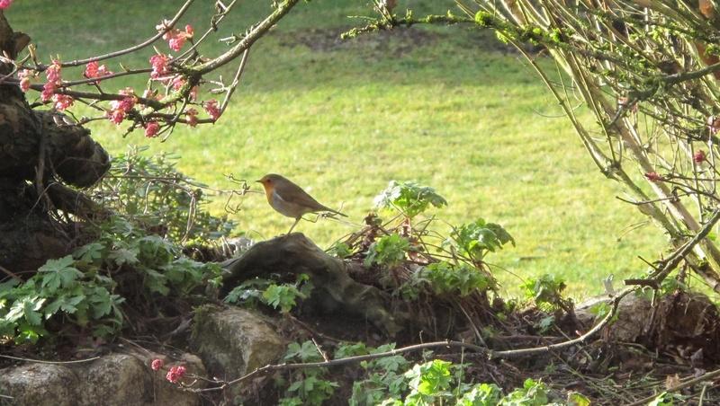 oiseaux présents cet hiver au banquet  Img_8219