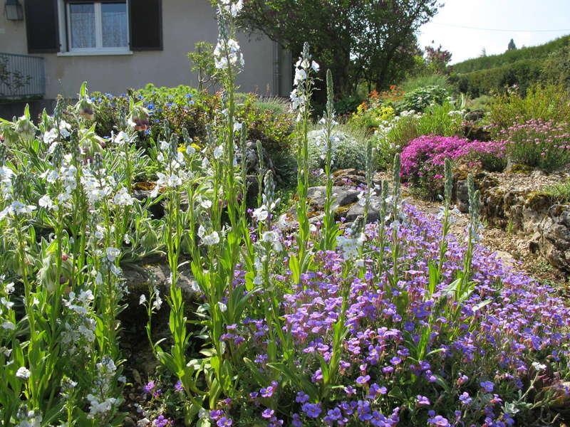 mois de mai au jardin Img_8415