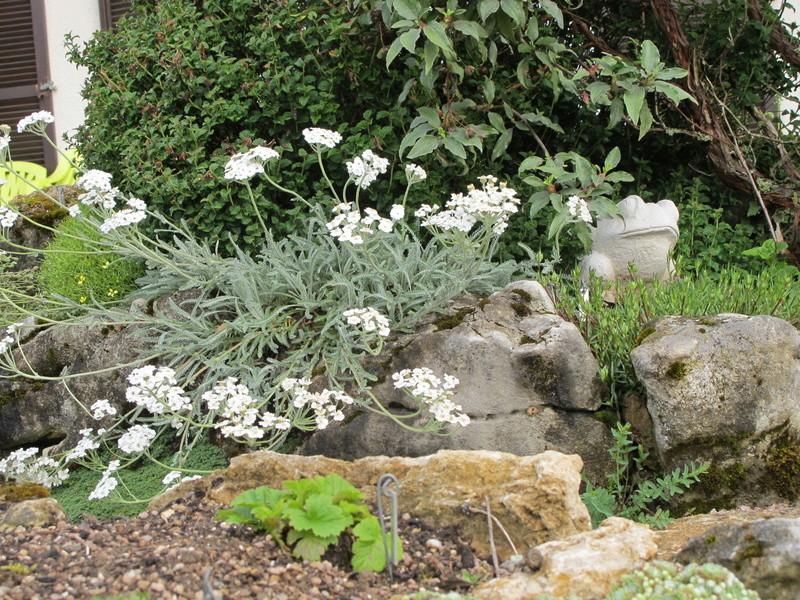 mois de mai au jardin Img_8420
