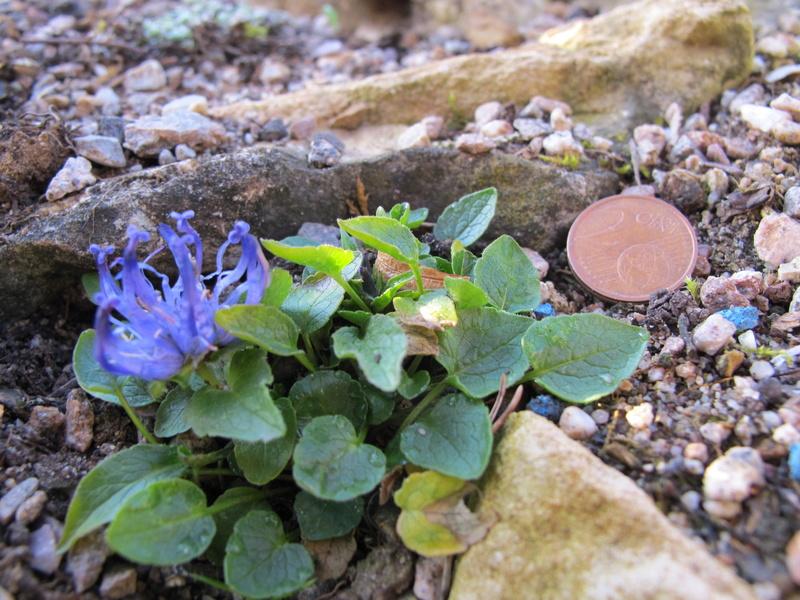 mois de mai au jardin Img_8421