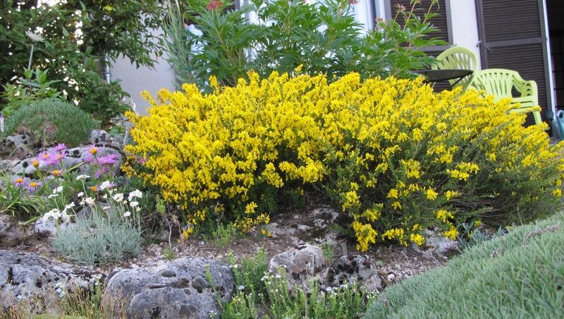 mois de mai au jardin Img_8423