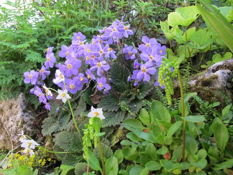 mois de mai au jardin Img_8427