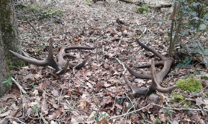 Surprise en forêt Paire_14