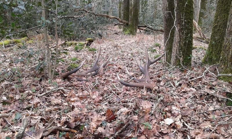Surprise en forêt Paire_15