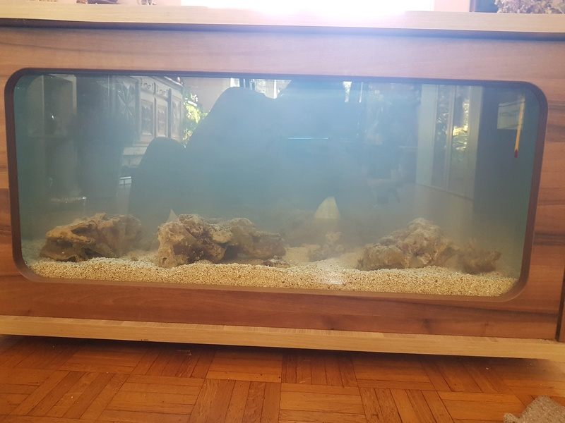 Mon aquarium de Toulouse. 360L Table basse 20170212