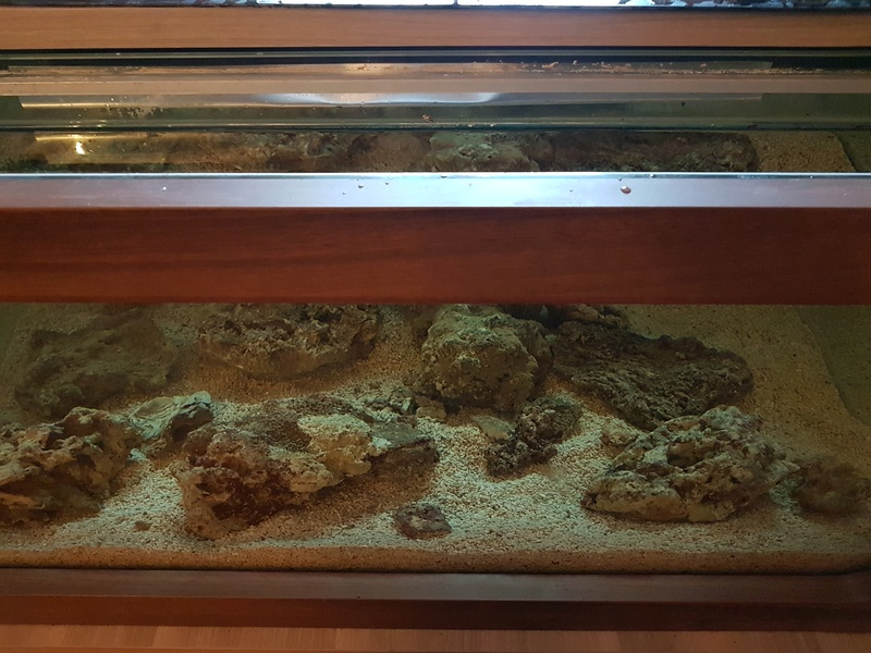 Mon aquarium de Toulouse. 360L Table basse 20170322