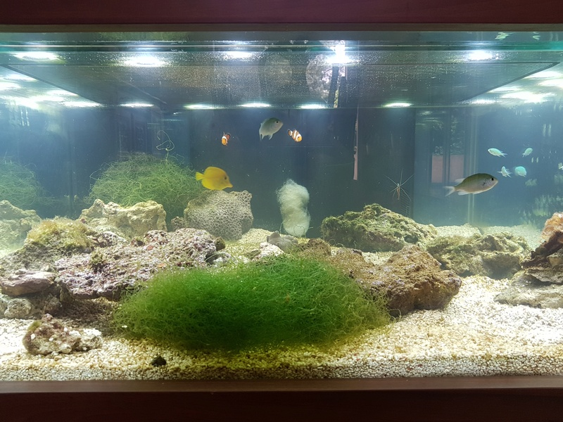 Mon aquarium de Toulouse. 360L Table basse - Page 2 20170515