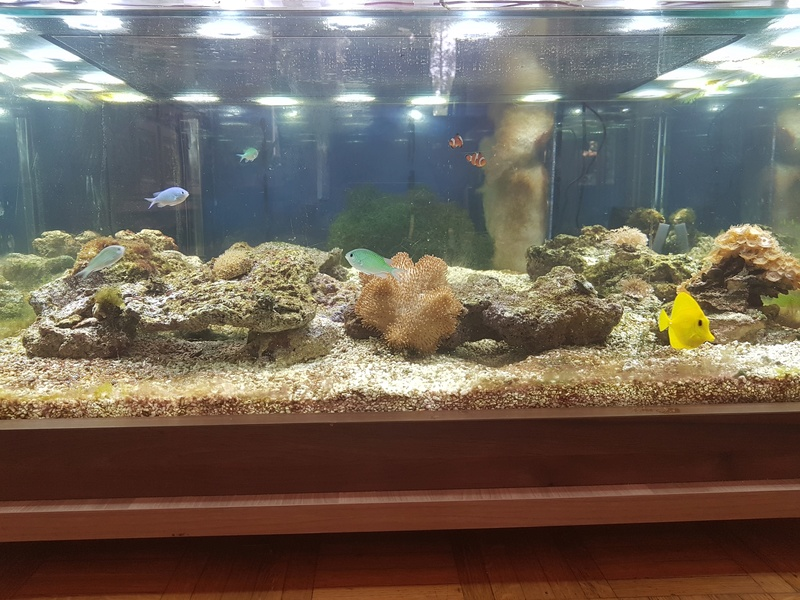 Mon aquarium de Toulouse. 360L Table basse - Page 2 20170613