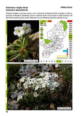 flore du val Camonica, en Lombardie 1_flor14