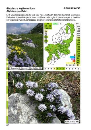 flore du val Camonica, en Lombardie 1_flor15