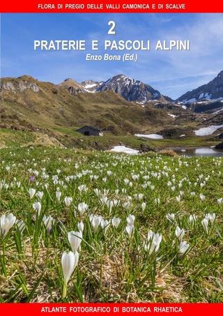 flore du val Camonica, en Lombardie 2_flor14