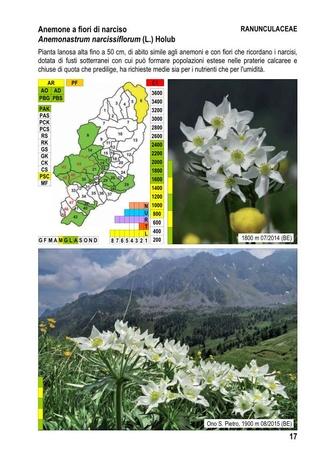 flore du val Camonica, en Lombardie 2_flor15