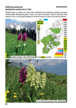flore du val Camonica, en Lombardie 2_flor16