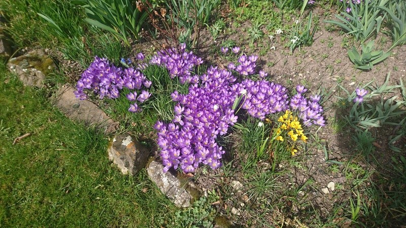 Erste Frühlingsboten im Garten und in Wald und Flur - Seite 49 Dsc_0844
