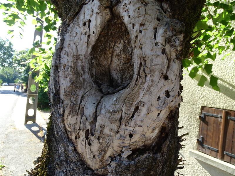 Insectes dans le tronc d'un très vieux tilleul Dsc03811